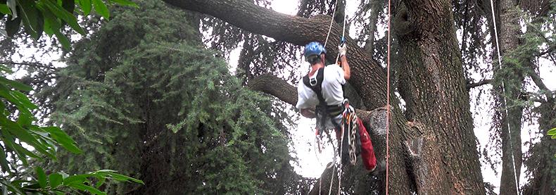 Tree Climbing Bergamo