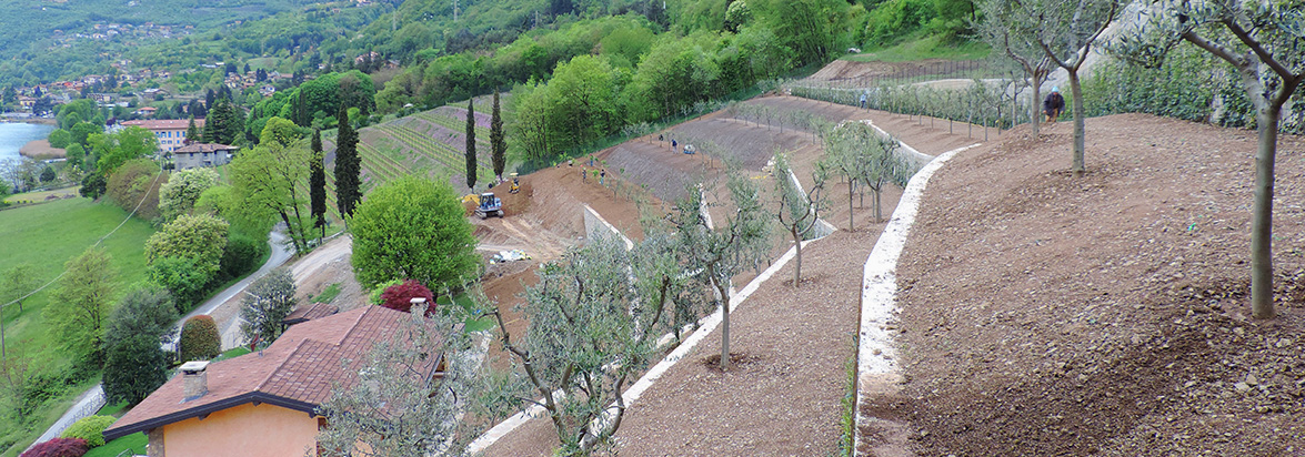 realizzazione parchi e giardini