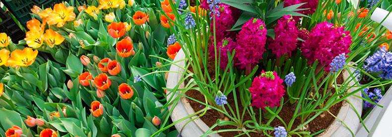 servizi rizzi giardinaggio