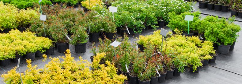 produzione vendita piante fiori
